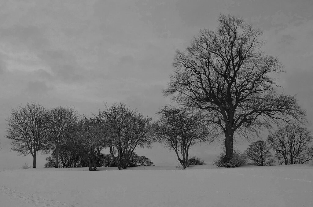 bleak winter scene